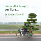 On Maillot bonsai shop delivery is our duty.
