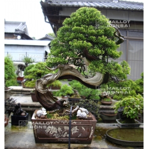Bonsai garden from Tomoya Nishikawa.
