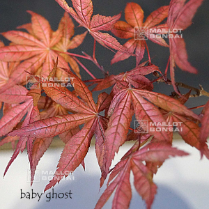 baby-ghost