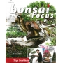 BONSAI FOCUS N° 87