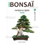 mini-bonsai-n-8-genevrier-rigida-kyosuke-gun