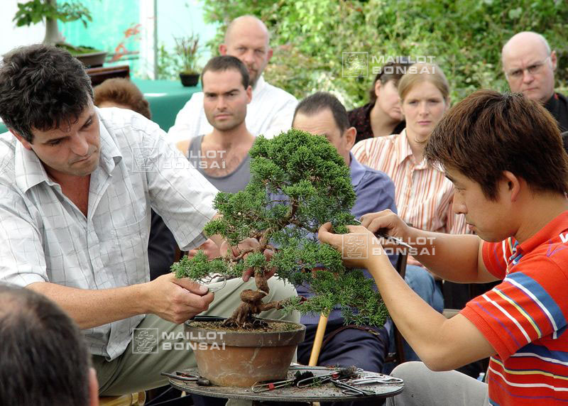 demonstration-sur-juniperus-chinensis